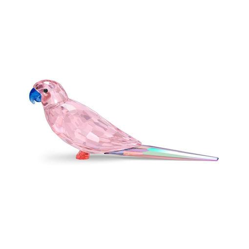 Swarovski figurer Jungle Beats Pink Parakeet Cha Cha - 5557848