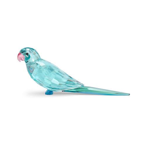 Swarovski figurer Jungle Beats Blue Parakeet Paco - 5574519